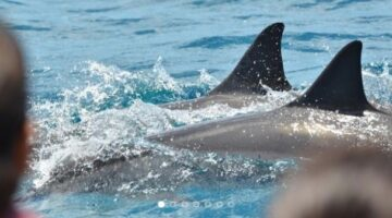 Dolphin Attractions
